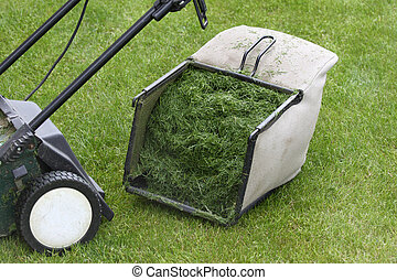 Lawn mower bucket full of freshly cut grass