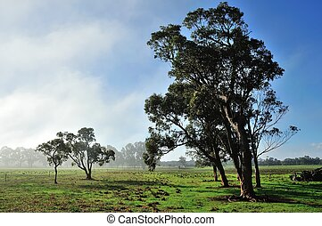 First Light - Gumtrees in green grassy paddock with whispy...