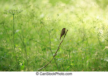 Robin Redbreast - little robin redbreast perched on a twig