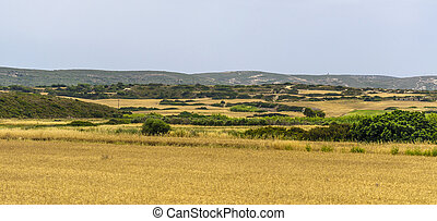 Rhodes rural landscape with yellow green dry field under...
