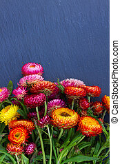 Bouquet of Everlasting flowers bouquet on on black stone...