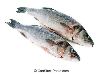 seabass - bass fish in front of white background