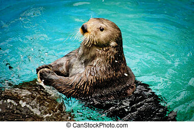 Sea otter is a marine mammal