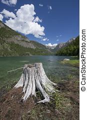 Stump at Lake MacDonald. - Lake MacDonald near St. Ignatius...