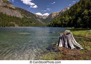 Stump by Lake MacDonald. - Lake MacDonald near St. Ignatius...