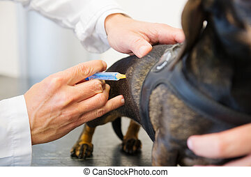 Giving dog a vaccine