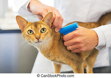 Microchip implant by cat - Microchip implant for cat by...