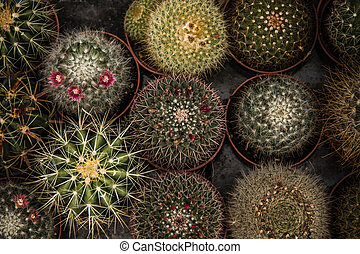 Little Green Cactuses - Little green cactuses with artficial...