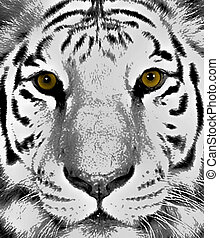 Tiger Eyes - Drawing of a gorgeous front facing Bengal Tiger...