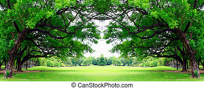 big tree in the park