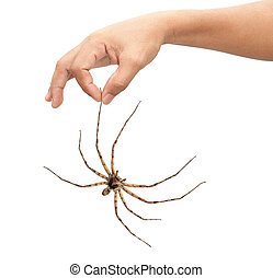 Adult man hand holding spider