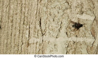 Fly on tree - Sits on wood surface and then fly flies