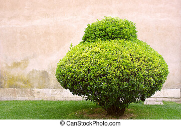 Alone trimmed bush on an old stone wall background