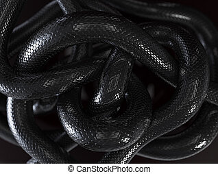 Snakes Background - Black snakes abstract background