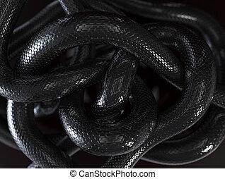 Serpientes, Plano de fondo