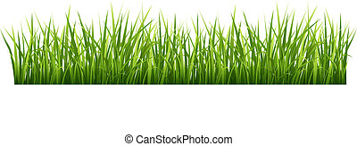 Grass - Vector illustration green grass on a white...