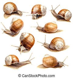 Snail collection