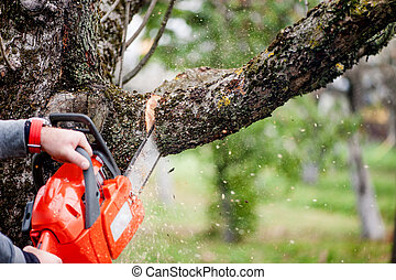 man cutting trees using an electrical chainsaw and...