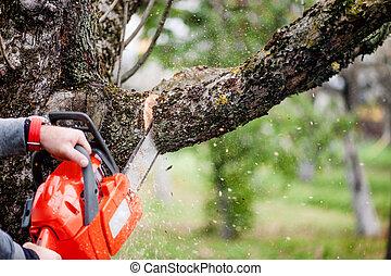 hombre, corte, árboles, Utilizar, eléctrico,...