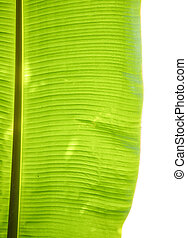Banana leaves on white background