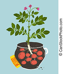 Growing Potato with Green Leafy Top in Pot - Vegetable...