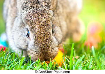 Close-up of easter bunny with colorful eggs and green...