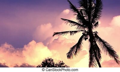 Dramatic sky with palm in the sunset time. Video