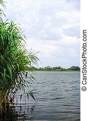 Preview landscape river reeds and stems - a Preview...