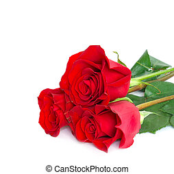 red roses - Close-up shot of a red roses