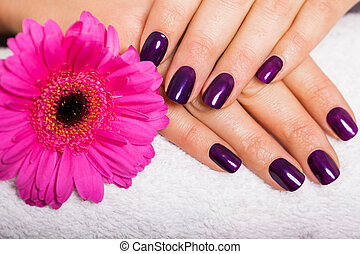 Woman with beautiful manicured purple nails - Woman with...