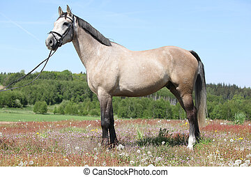 Amazing grey horse with bridle, standing in nature