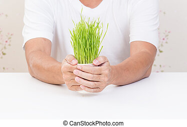 Man hands holding cup of wheat grass