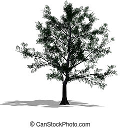 mapple tree - rendering of a tree with shadow and lipping...