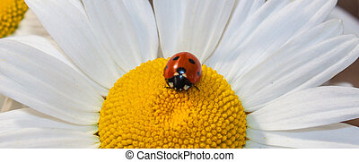 daisy with single lady bug. - a close up rendered daisy with...