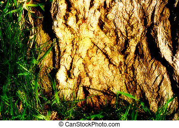Tree trunk and grass - Magical looking tree trunk and grass...