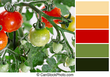 Growing tomatoes closeup  with complimentary swatches.