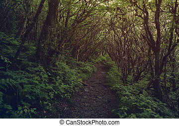 Dark pathway in the forest. - A pathway leads into the dark...