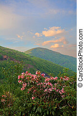 Mountains,  rhonodendron