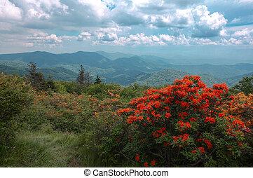 apelsin,  Mountains, Blomstrar