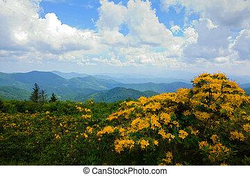 montagne, fiori, giallo