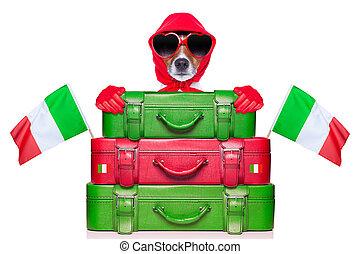italy dog