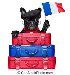 french dog - french bulldog waving flag of france with...