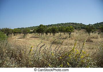 Orange Grove near Paderne, Algarve, Portugal
