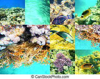 Coral and fish in the Red Sea, Egypt, Africa - Coral and...