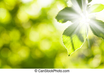 Abstract summer bokeh with green leaves