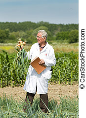 Agronomist with onion - Old agronomist holding and examining...