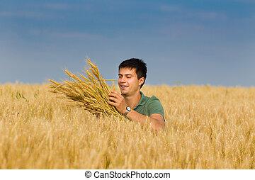 feliz, hombre, en, trigo, campo,