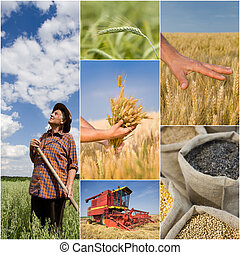 Agricultural collage - Collage of agricultural work on...