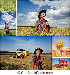 Harvesting wheat field - Collage of old peasant on wheat...