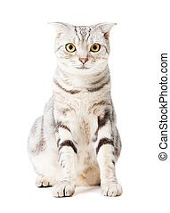 cute Cat isolated over white background. Animal portrait.